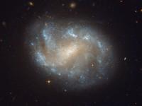 NGC 1483, a barred spiral galaxy in Dorado