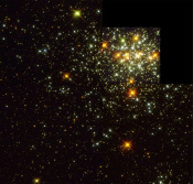 Distribution of Binaries in Young Star Cluster Explained