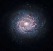 Anne's Image of the Day: Spiral Galaxy NGC 3982