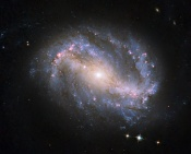 Anne's Image of the Day: Spiral Galaxy NGC 6217