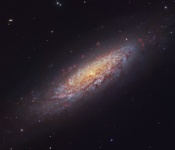 Anne's Image of the Day: Dwarf Spiral Galaxy NGC 6503